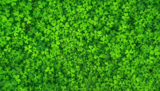 Drink Me, I'm Irish: Irish Tea Cocktails For St. Patrick's Day